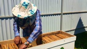 A abelha voada voa lentamente ao apicultor para recolher o néctar no apiário privado das flores vivas filme