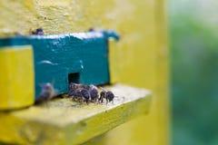 abelhas Foto de Stock Royalty Free