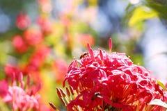 abelhas Fotos de Stock