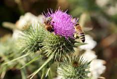 abelhas Fotografia de Stock