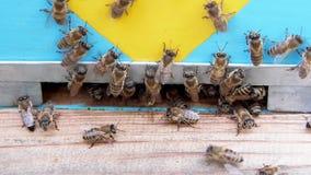Abelhas do mel em voo filme