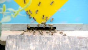 Abelhas do mel em voo video estoque