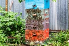 Abelhas do mel na colmeia no jardim fotos de stock royalty free