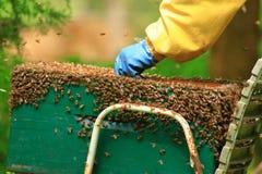 Abelhas do mel que pululam no favo de mel foto de stock royalty free