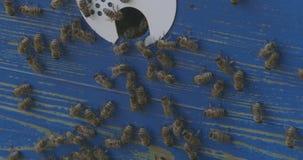 Abelhas e apiário em linha reta video estoque