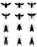 Abelhas e vespas Imagem de Stock