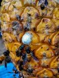 Abelhas em frutos foto de stock