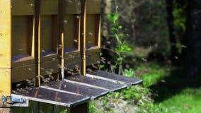 Abelhas em torno das caixas da abelha video estoque