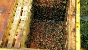 Abelhas na colmeia vídeos de arquivo