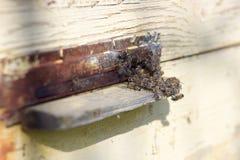 Abelhas na entrada da colmeia Imagens de Stock