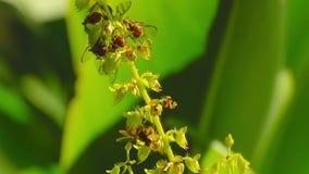 Abelhas na flor video estoque