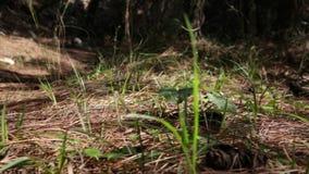 Abelhas na superfície da floresta video estoque