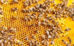 Abelhas no favo de mel imagem de stock