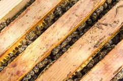 Abelhas nos favos de mel fotos de stock