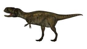 Abelosaurus dinosaur - 3D render. Abelosaurus dinosaur walking isolated in white background - 3D render Stock Photography