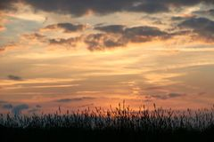 Abend auf dem Gebiet, sonnen das Glänzen auf Wildflowers oder Unkräutern lizenzfreies stockbild