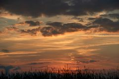 Abend auf dem Gebiet, sonnen das Glänzen auf Wildflowers oder Unkräutern stockfoto