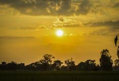 Abend auf dem Reisgebiet Thailand Lizenzfreie Stockfotografie