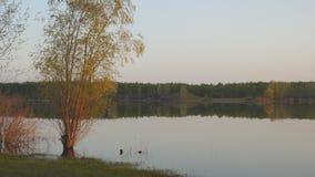 Abend auf einem ruhigen See stock video footage
