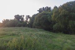 Abend auf einer Sommerwiese Stockfoto