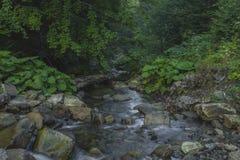 Am Abend fließt der Gebirgsfluss zwischen die Klippen Lizenzfreies Stockfoto