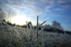 Abend-Frost im Winter Stockfotos