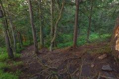 Abend am gezierten Gebirgswald Stockfoto