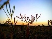 Abend-Gras lizenzfreies stockfoto