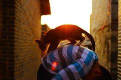 Am Abend hält ein kleiner Junge eine Katze lizenzfreie stockbilder