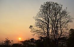 Abend-Hintergrundbeleuchtungsbaum Lizenzfreie Stockfotos