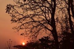 Abend-Hintergrundbeleuchtungsbaum Lizenzfreie Stockbilder