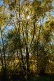 Abend im Herbstwald lizenzfreies stockbild