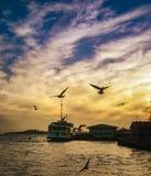Abend Istanbuls Bosphorus, Sonnenuntergangseemöwen und Leute Lizenzfreie Stockfotografie