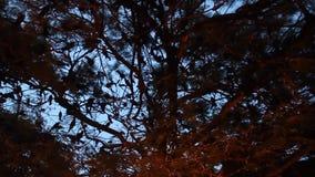 Abend mit Vogeltönen stock video footage