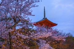 abend Pagode mit Himmel- und Kirschblüten auf dem Hintergrund Stockfotos