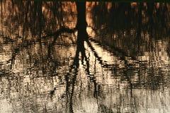 Abend-Reflexion im Teich Lizenzfreie Stockfotografie