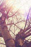 Abend-Sonnenstrahl mit einer Retro- Weinlese Stockbild