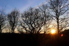 Abend Sun-Einstellung hinter unfruchtbaren Bäumen lizenzfreies stockbild