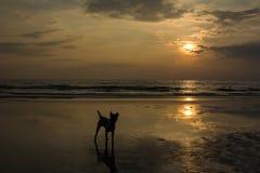 Abend vor Sonnenaufgang zum Sonnenuntergang Lizenzfreies Stockbild