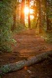 Abend-Wald Stockfotos