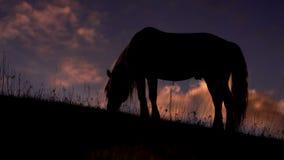 Abend-Weide in den Vorbergen stock footage