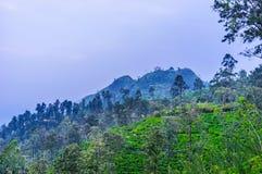 Abendansicht kleiner Adam-` s Spitze, Sri Lanka Lizenzfreies Stockfoto
