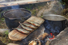 Abendessenüberlebende im Wald stockfotos