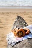 Abendessen durch den Ozean lizenzfreies stockbild