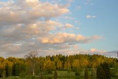 Abendhimmel über dem Wald in Schweden Lizenzfreies Stockbild
