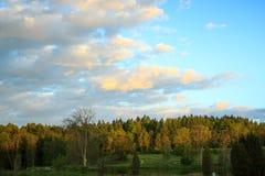 Abendhimmel über dem Wald in Schweden Lizenzfreie Stockbilder