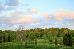 Abendhimmel über dem Wald in Schweden Stockfotografie