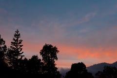 Abendhimmel mit dunkler Baumgrenze Lizenzfreie Stockbilder