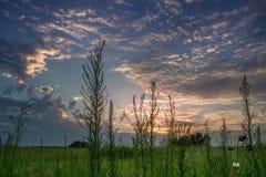 Abendhimmel von der niedrigen Perspektive auf einem Gebiet Lizenzfreie Stockfotos