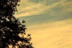 Abendlandschaft mit kontrastierenden Sonnenunterganghimmeln Stockbilder
